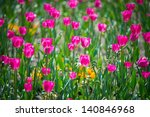 beautiful purple tulips in a... | Shutterstock . vector #140846968