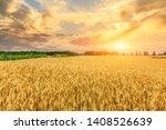 Wheat Crop Field Sunset...