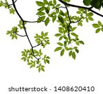 green tree branch isolated on... | Shutterstock . vector #1408620410