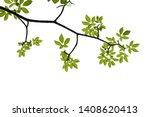 green tree branch isolated on... | Shutterstock . vector #1408620413