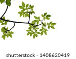 green tree branch isolated on... | Shutterstock . vector #1408620419