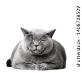 Smiling Cat Laying  Isolated On ...