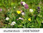Wildflower Meadow With Daisies...