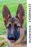 cute puppy of german sheperd...   Shutterstock . vector #1408846610