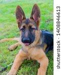 cute puppy of german sheperd...   Shutterstock . vector #1408846613