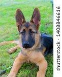 cute puppy of german sheperd...   Shutterstock . vector #1408846616