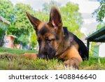 cute puppy of german sheperd...   Shutterstock . vector #1408846640