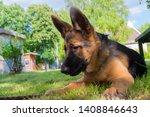 cute puppy of german sheperd...   Shutterstock . vector #1408846643