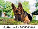 cute puppy of german sheperd...   Shutterstock . vector #1408846646