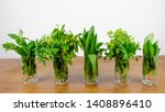 Green Fresh Wild Herbs From The ...