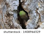 Extreme Close Up Of A Hollow...