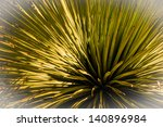 Desert Yucca Plant With A...