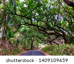 a lonely tree lined road on the ... | Shutterstock . vector #1409109659