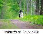 Stock photo border collies run 140916910