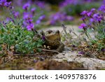 Frog Common Toad Bufo Bufo...