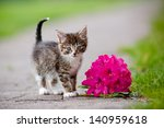 Stock photo tabby kitten portrait with a flower 140959618