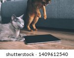 Stock photo two funny kitten watching at tablet screen playful abyssinian cat and active russian blue cat 1409612540
