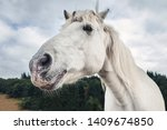 White Horse Head Side View Wit...