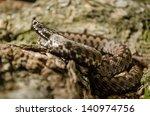 adder snake | Shutterstock . vector #140974756
