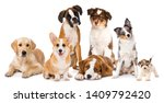 Stock photo different breed dog puppies isolated on white background 1409792420