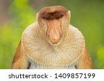 proboscis monkey  nasalis... | Shutterstock . vector #1409857199