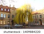 Big Willow Tree In European Ol...