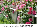Stock photo june garden climbing pink roses on white fence 140997250