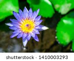 blue lily water or lotus flower ... | Shutterstock . vector #1410003293
