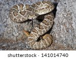 a mojave or mohave rattlesnake  ... | Shutterstock . vector #141014740
