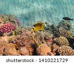 butterflyfish  chaetodontidae ... | Shutterstock . vector #1410221729