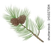 Pinecone. Pine Tree Branch...