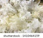 Close Up Snow Fungus  White...