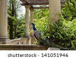 peacock in a stately manor... | Shutterstock . vector #141051946