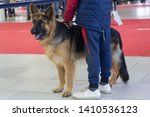 young german shepherd dog at... | Shutterstock . vector #1410536123