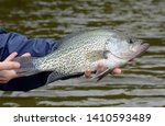A large black crappie fish being held horizontally in bare hands against a brown water background on a cloudy day