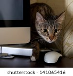 Stock photo a small cat in a home office peeping behind a computer screen domestic cat in natural background 141065416