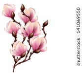 magnolia branch isolated | Shutterstock . vector #141069550