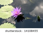 water lily | Shutterstock . vector #14108455