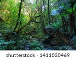 Deep, stunning New Zealand forest with ferns, moss on stones, many other plants and stream.  Beautiful summer day.