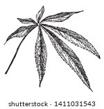five to seven leaf are compound ... | Shutterstock .eps vector #1411031543
