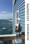 Picture Of A Brown Pelican In...