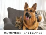 Stock photo cat and dog together on sofa indoors funny friends 1411114433