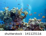 coral reef with hard corals and ... | Shutterstock . vector #141125116