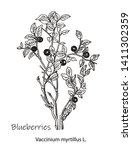 blueberry hand drawing vintage... | Shutterstock .eps vector #1411302359