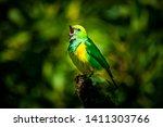 Singing Bird Singing Its Song....