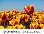super sharp close up macro shot ...   Shutterstock . vector #1411325723