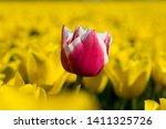 macro shot of different color...   Shutterstock . vector #1411325726