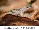 Portrait of eastern fence lizard, Sceloporus undulatus
