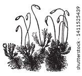 A Moss Is A Flowerless  Spore...