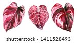 set of burgundy and red... | Shutterstock . vector #1411528493